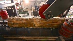 Haz de madera en transportador, proceso de madera en una fábrica de carpintería, interior industrial en una serrería almacen de metraje de vídeo