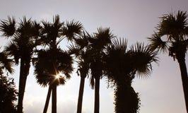 Haz de Sun que brilla con las palmeras imagen de archivo