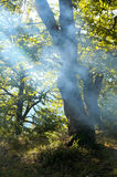 Haze in autumn forest Stock Images
