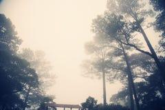 Haze Forrest stock photos