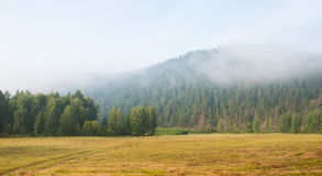 Haze morning in the forest Stock Photo