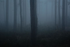Haze in the woods Stock Photography