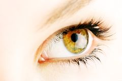 Hazel eye royalty free stock images