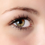 Hazel eye Royalty Free Stock Image