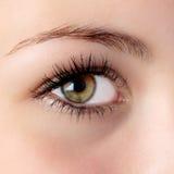 Hazel eye. Beautiful hazel eye Royalty Free Stock Image