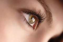 Hazel eyes Stock Photography