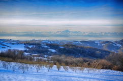 Hazel Grove under the Snow. In the Langhe, Italian region, with the distant Alps and the Monviso Mountain in the background stock photos