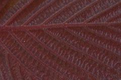 Hazel leaf Stock Photos