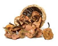 Hazel mushroom. Isolated on white background stock photo