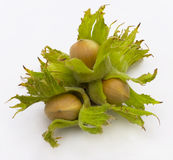 Hazel, nut Stock Photography