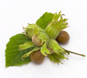 Hazel, nut Royalty Free Stock Photos