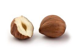 Hazel nut. Isolated on white background royalty free stock photo