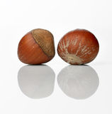 Hazel nut Stock Images