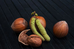 Hazel nut Stock Photography