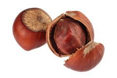 Hazel nut Royalty Free Stock Image