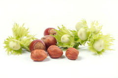 Hazel-nut Stock Images