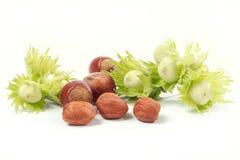 Hazel-nut stock images