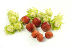 Hazel-nut stock image