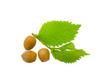 Hazel nut. Three filbert with leaves isolated on a white background Stock Photos