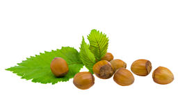 Hazel nut. Filbert with leaves isolated on a white background Royalty Free Stock Images