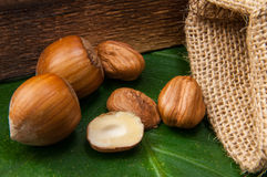 Hazel nut Stock Image