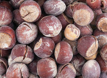 Hazel nut brown background Stock Photo