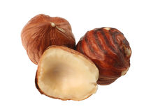 Hazel nut group Stock Photography