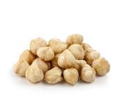 Hazel nut i Royalty Free Stock Image