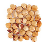 Hazel nut isolated Stock Photo
