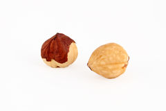 Hazel nut isolated Royalty Free Stock Image