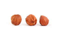 Hazel nut isolated Stock Image