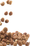 Hazel nut on white Stock Images