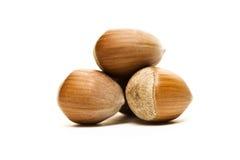 Hazel nuts Stock Images
