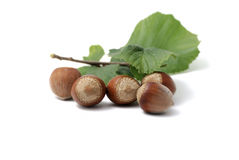 Hazel nuts. Isolated on white background royalty free stock images