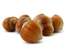 Hazel nuts Royalty Free Stock Photos