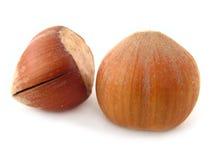 Hazel Nuts. Isolated on white Stock Images