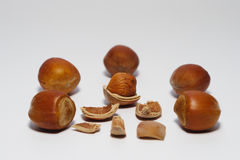 Hazel Nuts. Five Hazel Nuts and one on white background stock image
