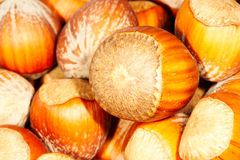 Hazel nuts. Brown hazel nuts. Close up Stock Image