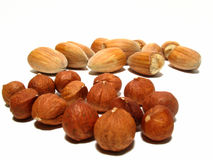 Hazel nuts Stock Image