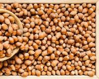 Hazel nuts in box royalty free stock image