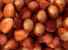Hazel nuts and filbert texture. Or background. CG render Royalty Free Stock Photo