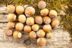 The hazel nuts 2 Royalty Free Stock Images
