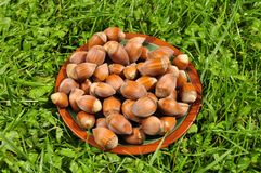 Hazel nuts on a plate Stock Photography