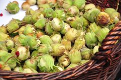 Hazel seedlings. Basket of hazel (nut-tree) seedlings for sale in a market Stock Images