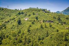 Hazel Trees by Coast of Black Sea in Tirebolu, Turkey. Asia stock photography