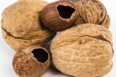 Hazel- and walnuts Stock Image