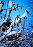 Hazelaar van detail de sneeuwtakken royalty-vrije stock afbeeldingen