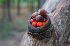Hazelnoot en lijsterbessenbessen in het bos Royalty-vrije Stock Afbeelding