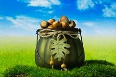 Hazelnoten in de groene decoratieve pot op het gras Royalty-vrije Stock Fotografie