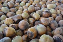 Hazelnoten, maïskolf en hazelnootnoot Stock Foto's